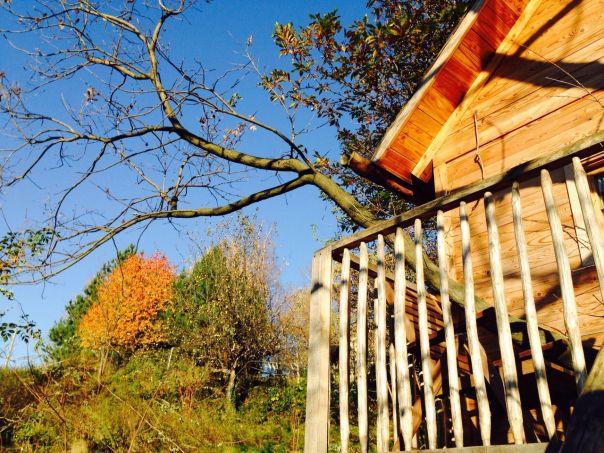 Casa sull 39 albero quercia il giardino dei semplici manta for M innamorai giardino dei semplici accordi